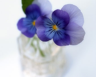 Miniature Pansy : vintage faded flower photography purple violet lavender home decor 8x10 11x14 16x20 20x24 24x30