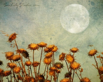 Harvest Moon : surreal photography golden landscape autumn rural country blue sky thistle warm gold home decor 8x10 11x14 16x20 20x24 24x30