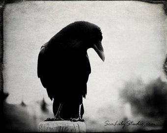 The Raven 24x30 : crow raven photography black bird goth gothic dark dream surreal poe poem rustic vintage halloween