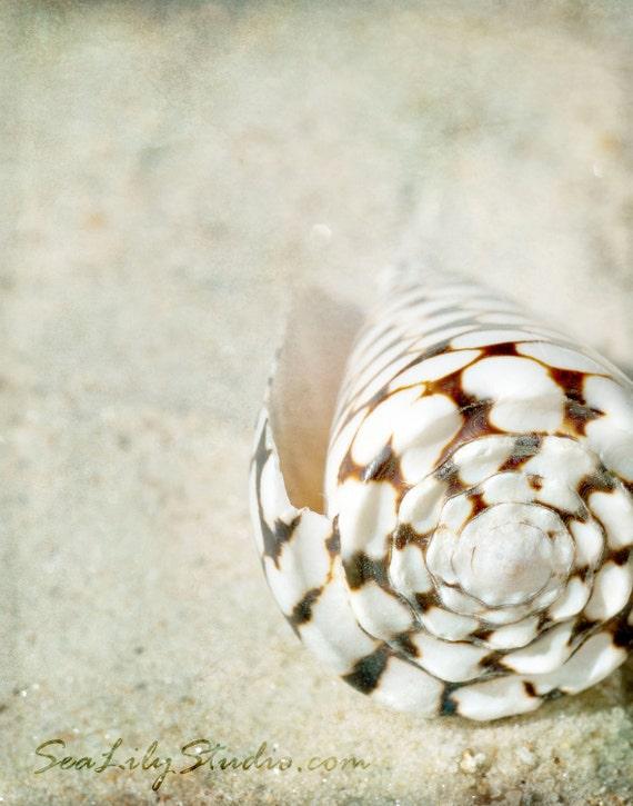 Marbled Cone : summer beach sea shell photography sand ivory cream brown ecru california coastal home decor 8x10 11x14 16x20 20x24 24x30