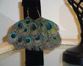 Oversized Peacock feather earrings