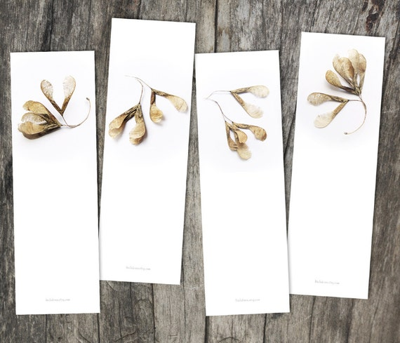 maple seed bookmark, set of 4, photography, bookmark set, library, book lover, autumn, fall, brown, taupe, white, dry seed, minimal