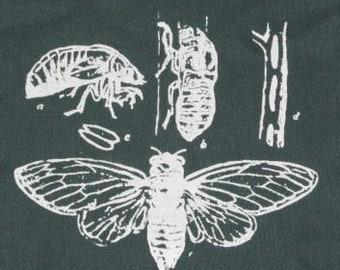 insect patch - Cicada Life Cycle Patch - Green - bug patches, science patch, Insect Critter Biology, nature geek punk patch, kids, children