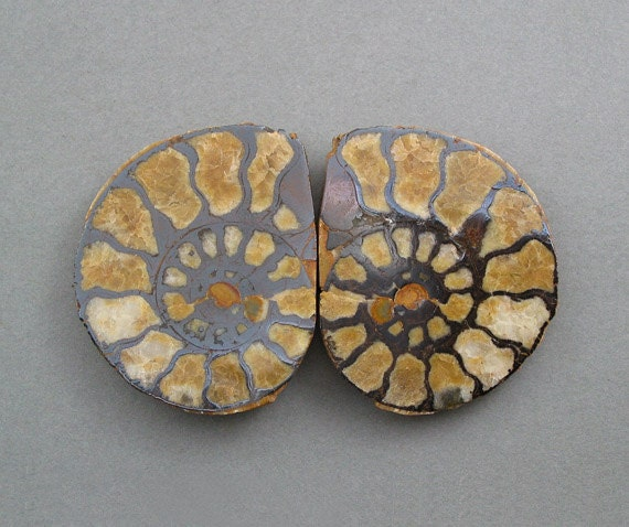 fossil AMMONITE matching pair two 38X46mm cabochons