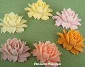 34-00-Mix-CA  6pcs Pretty Cabbage Rose Cabochon - MixColour