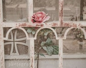 Pink Rose on a fence - 8x10 Fine Art Photograph