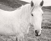 White Horse Art, Black and White Horse Photograph, Animal Print