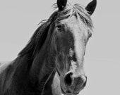 Black and White Horse Photograph, Black Horse, Equine Home Decor