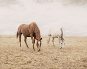 Rugged Country Photograph, Montana, Equine Photography, Open Spaces