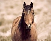 Brown Horse Photograph, Western Nature Photography