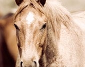 Red Roan Equestrian Photograph, photography, art, horse photo