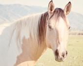Tan Horse Art, Sweet Summer, Pastel Nature Photograph, Summer Art, Animal Photograph,