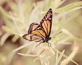 Butterfly Nature Photograph, Nature Photography, Springtime Photo
