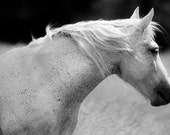 Black and White Canvas Wrap, Large Canvas Print, Horse on Canvas, 30x20