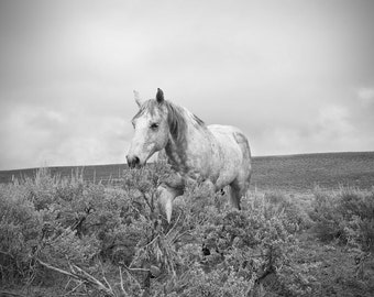 Black and White Horse Landscape Photograph, Stormy Walk, Western Horse in Nature Art