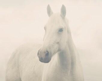 Dreamy White Horse Photograph | White Horse in Fog