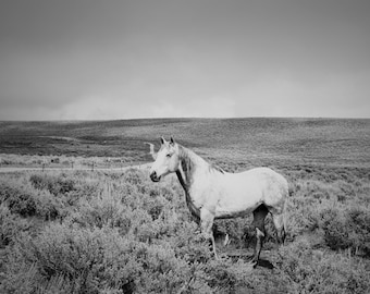 Spring Showers, Dramatic Black and White Photograph, White Horse and Storm, Size 8x10, Horse Art