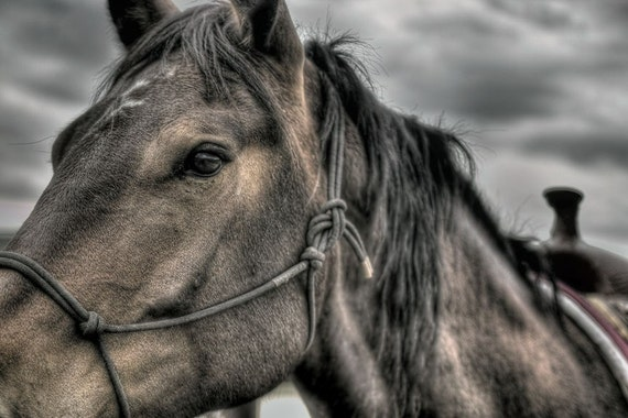 Dark Horse Unique Photograph, Fine art horse portrait photograph, Hdr photography