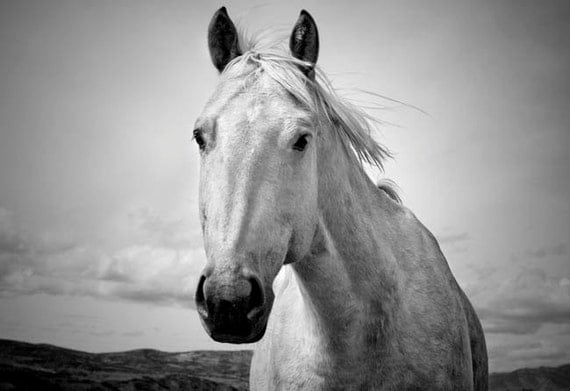 Black and White Horse Photography, Western Horse Art in Black and White