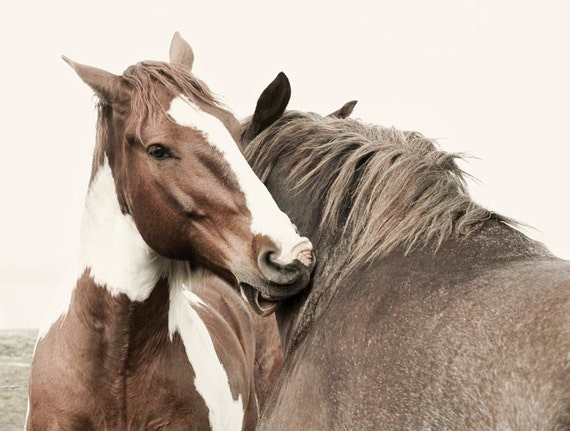 CANVAS SALE, Canvas Horse Photograph, Best Buds, Size 16x20, Canvas Wrap Art