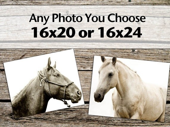 Large Photograph, Any 16x20 or 16x24 Photograh, Horse and Nature Photography