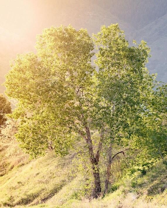 Sunlit Green Tree Photograph, Nature Photography, Landscape, Summer