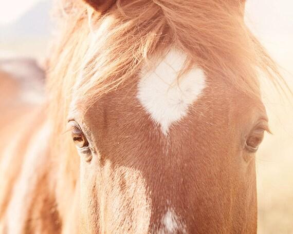 Eyes Horse Photo, Amber Sunlight Summer Photography, Sunny Summer Art