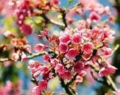 Sakura - 8x10 photo print