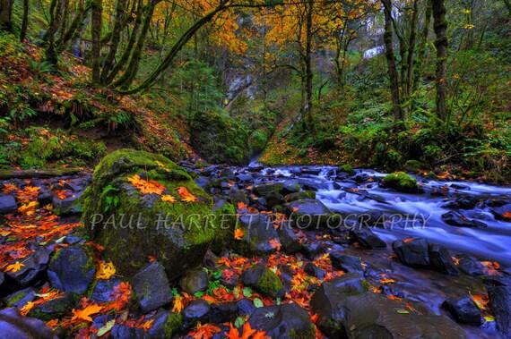 Autumn  Photography - Photo Art - Fine Art Photography - Columbia Gorge - Waterfalls - Fall Colors - 12 X 18 - Prints