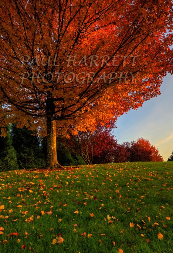 Autumn Photography - Photo Art  - Fine Art Photography - Fall Colors - Photography -   12 X 18 - Print