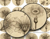 Botanical 1 inch Circles, Digital Collage Sheet, Vintage Floral, Digital Botanical