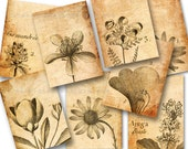 Botanical Drawings, Collage Sheet, Tags, ACEO, Vintage Images, Aged Paper, Digital Background