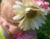 cream daisy and pink sweetpea hair clip