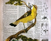 Bird Print on Vintage French dictionary