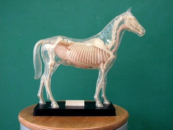 1950's Visible Horse Model by Renwal, Completely Assembled, Plastic, Horse Skeleton, Scientific Toy