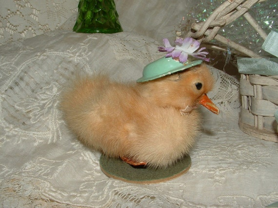 Vintage 1940's Taxidermy Easter Duckling with flowered  green hat