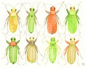 Eight beetles collection no.1 - original watercolor 8x10 inches - Cantharidae