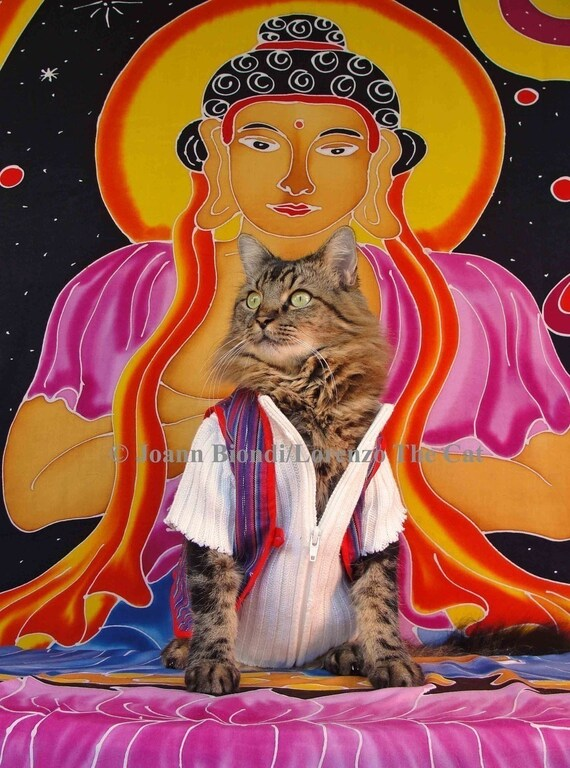 Buddha Puss Greeting Card
