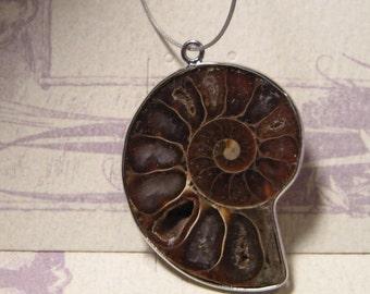 Ammonite  half... .............. 38 x 29 x 6mm       ....    3928