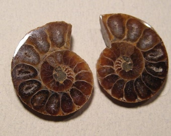 Ammonite  halves....   2 pieces .............. 30 x 25 x 5mm       ....         156