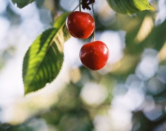 Born Together-Siobhan Photography-Fine Art Photography-Cherries