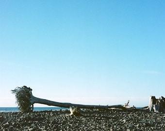 Drift Wood- Fine Art Photography- Oregon-Beach