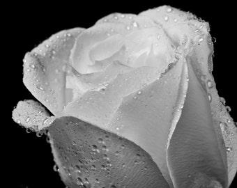 Single Rose on Black, Fine Art Black and White Photography, Flower Art, Flower Photography