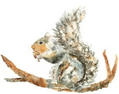 Squirrel Print, Watercolor, Animal Nursery Art, squirrel, grey, nursery print- 8x10