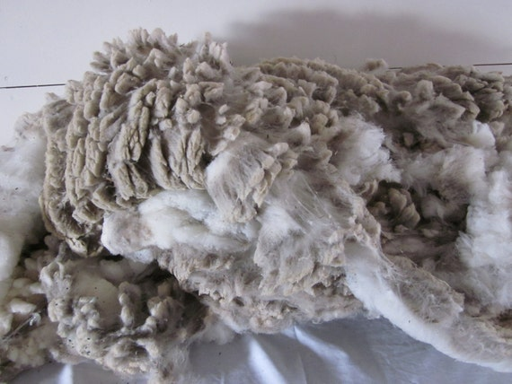 "Targhee Polypay Cross Raw Unwashed Sheep Wool Fleece Number 2008 ""Marshmallow"""