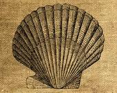 INSTANT DOWNLOAD Big Scallop Vintage Illustration Image Transfer Digital Sheet by Room29 - Sheet no. 310