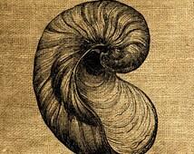 INSTANT DOWNLOAD Seashell Vintage Illustration - Download and Print - Image Transfer - Digital Sheet by Room29 - Sheet no. 351