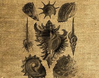 INSTANT DOWNLOAD Real Seashells Vintage Illustrations - Download and Print - Image Transfer - Digital Sheet by Room29 - Sheet no. 246