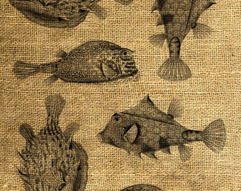 INSTANT DOWNLOAD Scary Fish Vintage illustration - Download and Print - Image Transfer - Digital Sheet by Room29 - Sheet no. 275