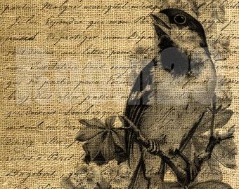 INSTANT DOWNLOAD Bird on Calligraphy Vintage Illustration - Download and Print - Image Transfer - Digital Sheet by Room29 Sheet no. 505
